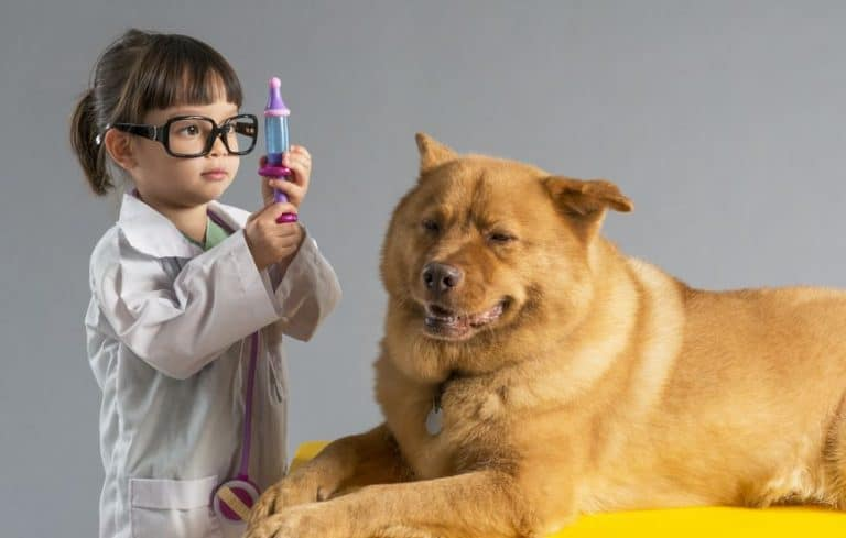 Una niña jugando con un perro