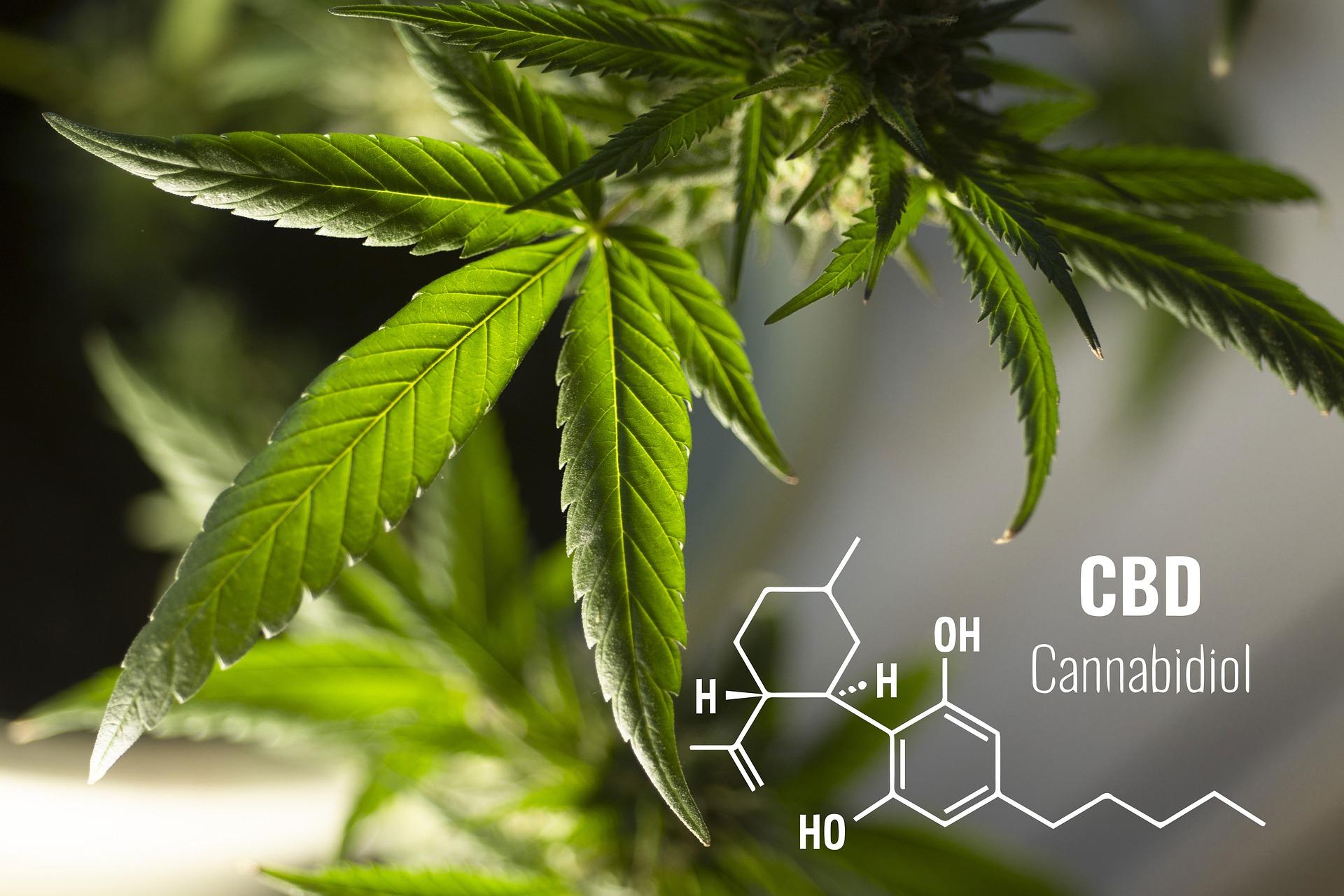 estructura del cannabis