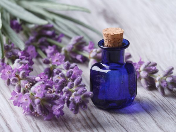 lavender oil in a glass bottle on a background of fresh flowers. Horizontal close-up