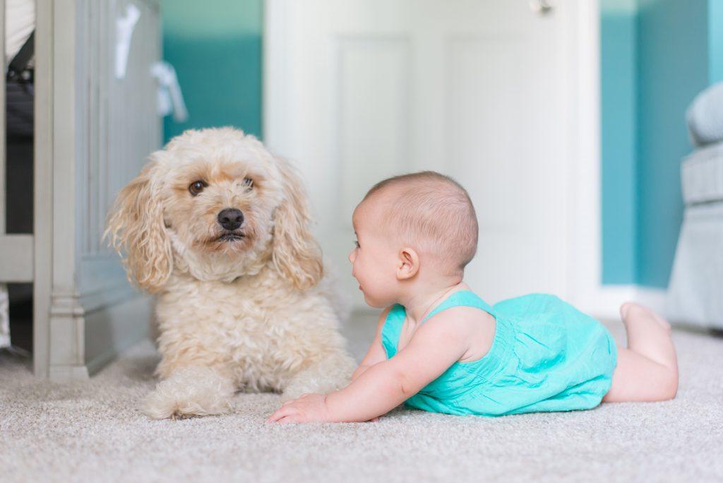 perrito con bebe
