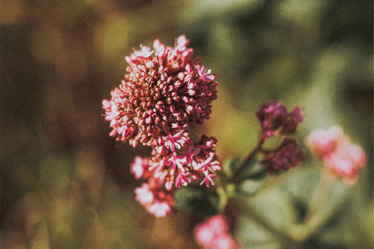flor relajante